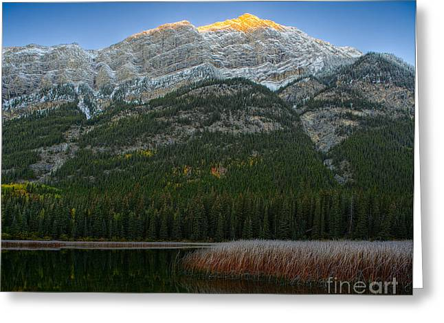 Alpenglow Over Frosty Reeds Greeting Card