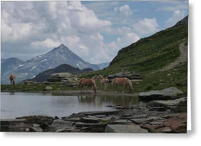 Alps' Horses Greeting Card