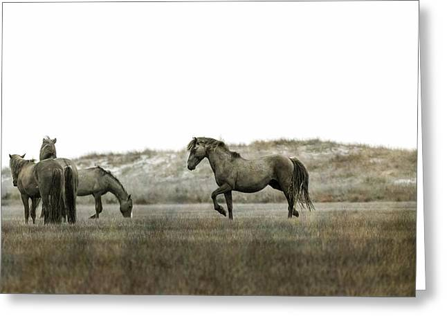 Alpha Stallion Communication With The Band Greeting Card