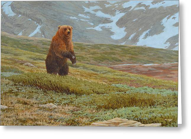 Alpine Encounter Greeting Card by Jim Young