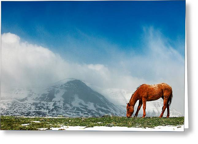 Alpine Equine Greeting Card by Todd Klassy