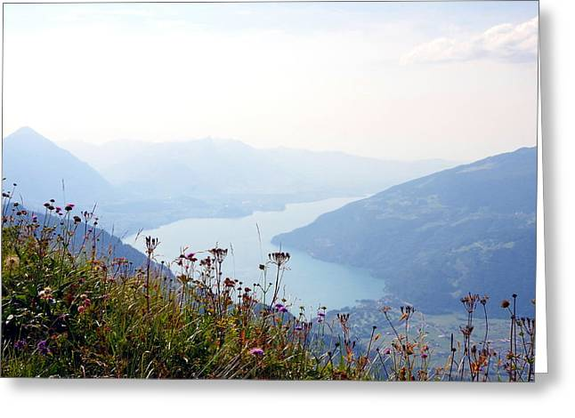 Alpine Flora On Top Of Schynige Platte Greeting Card