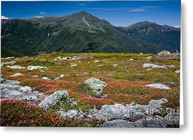 Alpine Garden Greeting Card by Susan Cole Kelly