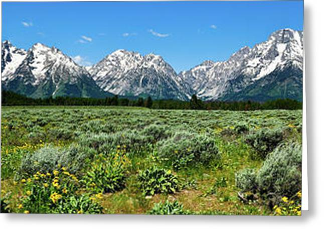 Alpine Meadow Teton Panorama II Greeting Card by Greg Norrell