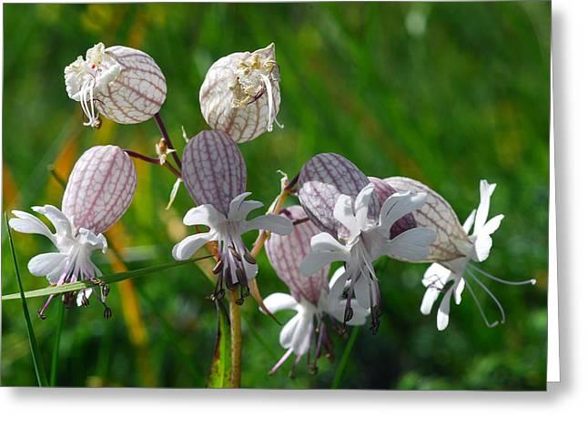 Alpine Wildflowers In Bloom Greeting Card by Anne Keiser