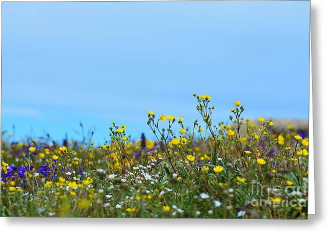 Greeting Card featuring the photograph Alpine Wildflowers by Kate Avery