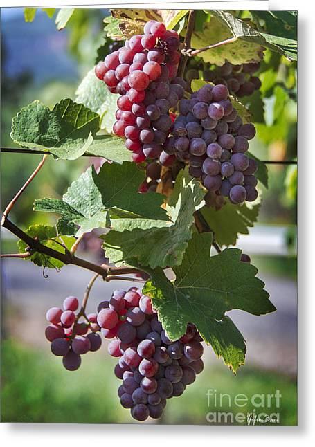 Alsace Vineyards Greeting Card by Yefim Bam