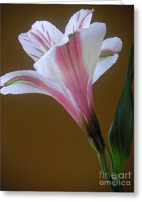 Alstroemeria - Reaching Greeting Card by Lucyna A M Green