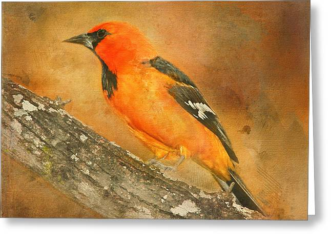Greeting Card featuring the photograph Altamira Oriole by Bellesouth Studio