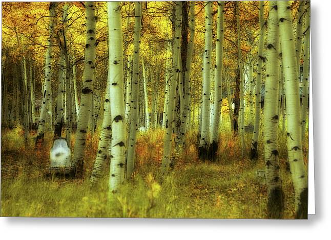 Alvarado Autumn 1 Greeting Card