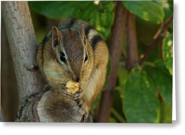 Greeting Card featuring the photograph Alvin Eating 1 by Brian Hale