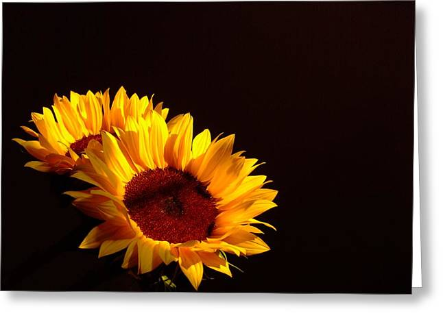 Always Into The Sun Greeting Card by Juana Maria Garcia-Domenech
