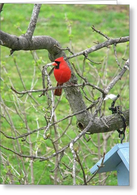 Always With Us -cardinals Greeting Card
