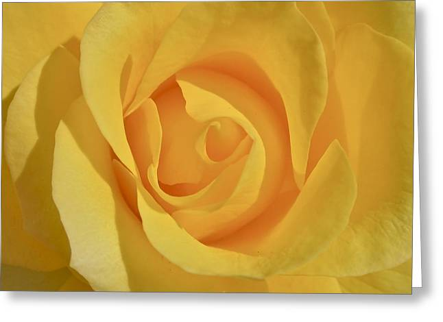 Amarillo Greeting Card by Gwyn Newcombe