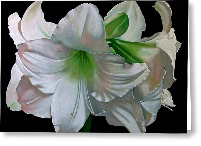 Doug Strickland Greeting Cards - Amaryllis Greeting Card by Doug Strickland