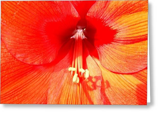 Amaryllis Outdoors Greeting Card by Beth Akerman