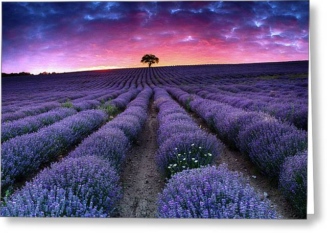 Amazing Lavender Field With A Tree Greeting Card by Evgeni Dinev