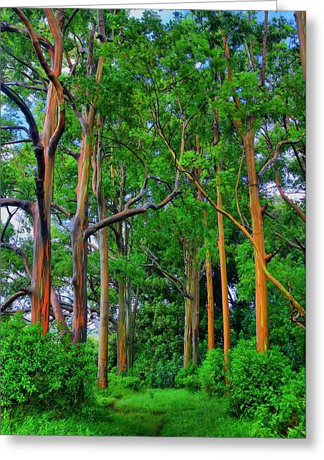 Amazing Rainbow Eucalyptus Greeting Card