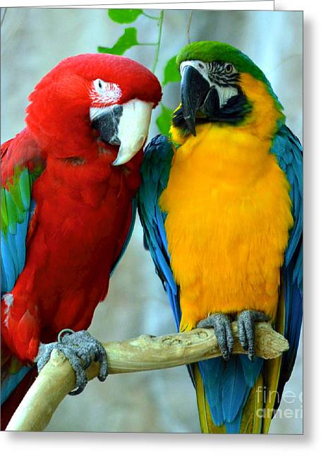 Amazon Parrots Greeting Card by Dani Stites