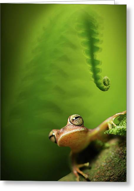 Amazon Tree Frog In Tropical Rain Forest Bolivia Greeting Card by Dirk Ercken