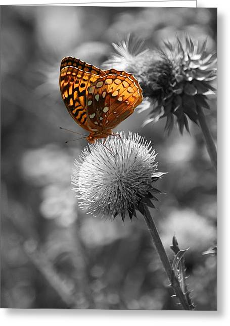 Amber Butterfly Colorized Greeting Card