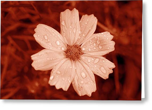 Amber Daisy Droplets Greeting Card by Sean Davey