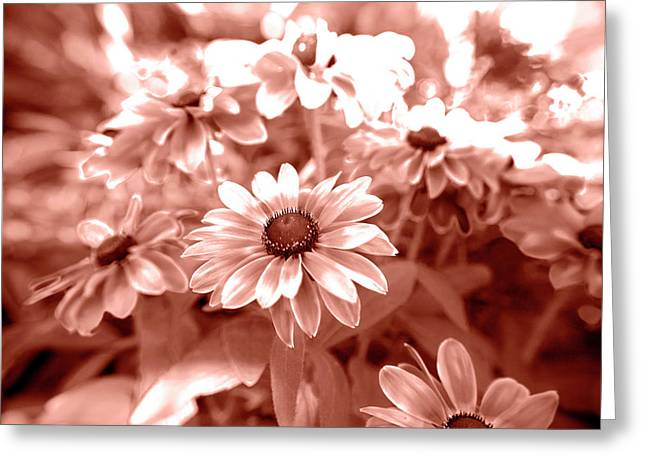Amber Daisys Greeting Card by Sean Davey