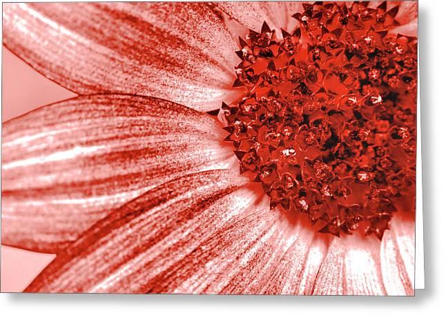 Amber Macro Petals Greeting Card by Sean Davey