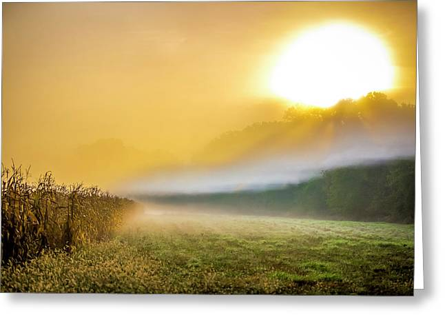 Amber Morning Greeting Card by Todd Reese