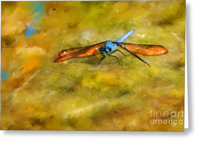 Transformative Art Greeting Cards - Amber Wing Dragonfly Greeting Card by Lisa Redfern