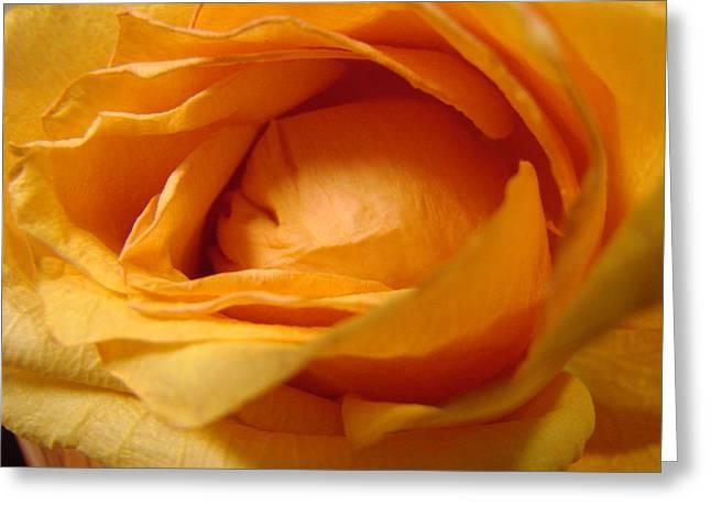 Amber's Rose Greeting Card