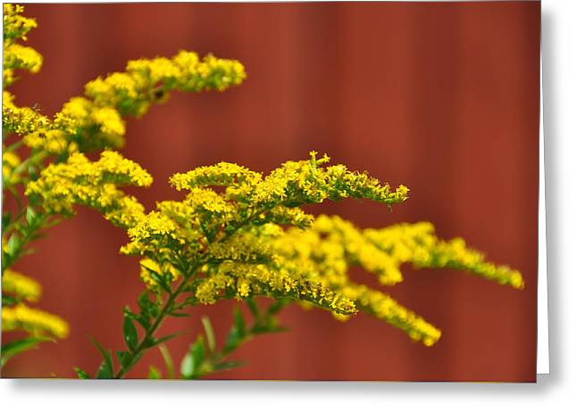 Ambrosia Greeting Card by JAMART Photography