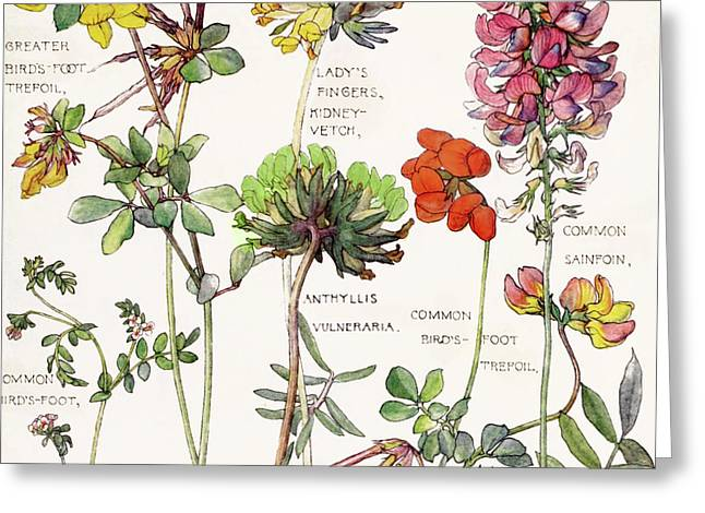 Ambrosia V Greeting Card