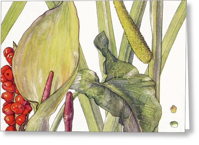 Ambrosia Xii Greeting Card