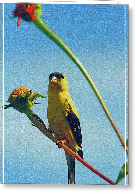 America Goldfinch On Gayfeather Greeting Card