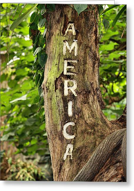 America Greeting Card by Karen M Scovill