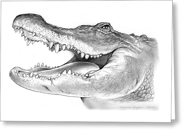 American Alligator Greeting Card by Greg Joens