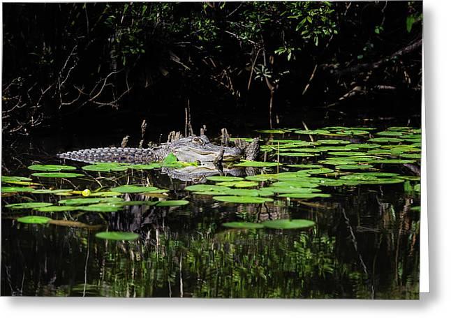 American Alligator In South Walton Florida Greeting Card