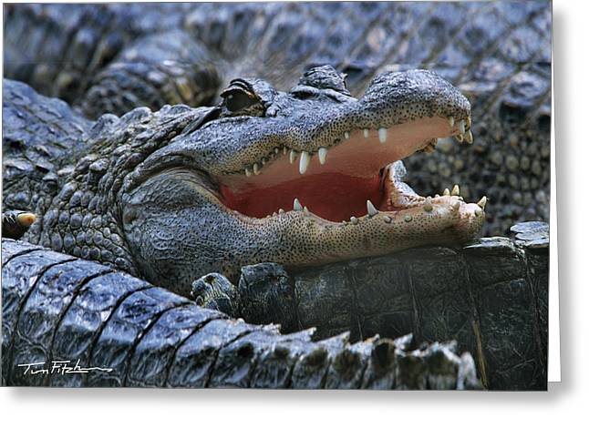 American Alligators Greeting Card