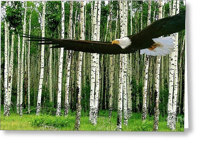 American Bald Eagle, Hunting, Cutthroat River Basin, Colorado Greeting Card by Thomas Pollart