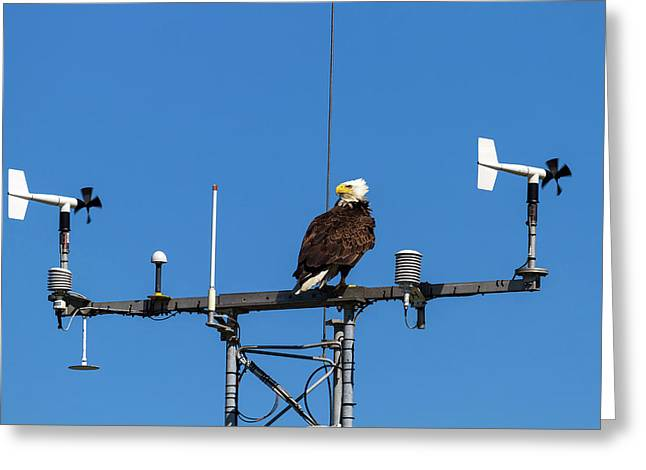 American Bald Eagle Perched On Communication Tower Greeting Card by David Gn