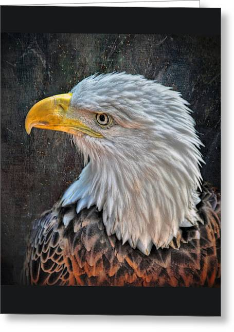 Greeting Card featuring the photograph American Bald Eagle by Savannah Gibbs