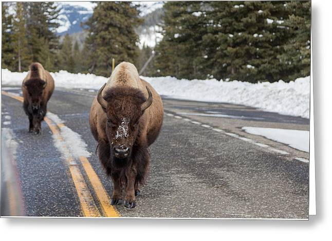Greeting Card featuring the photograph American Bison In Yellowstone National Park by Carol M Highsmith