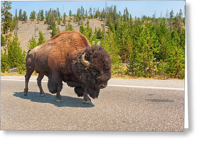 Greeting Card featuring the photograph American Bison Sharing The Road In Yellowstone by John M Bailey