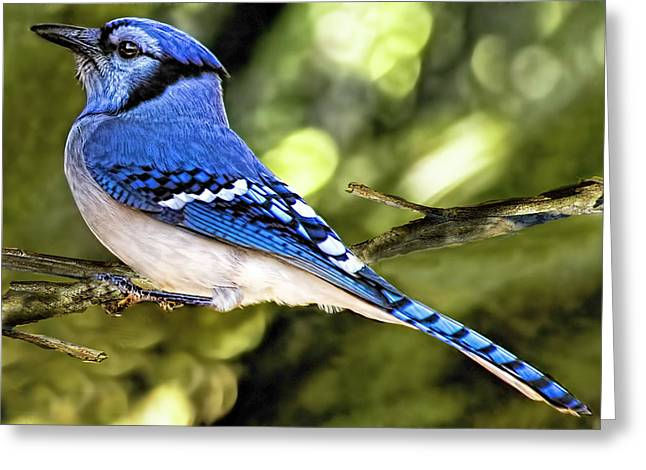 Blue Jay Bokeh Greeting Card