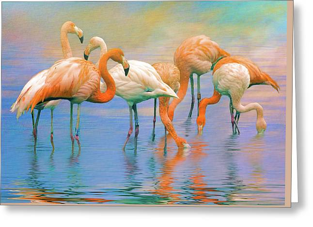 American Flamingos Greeting Card
