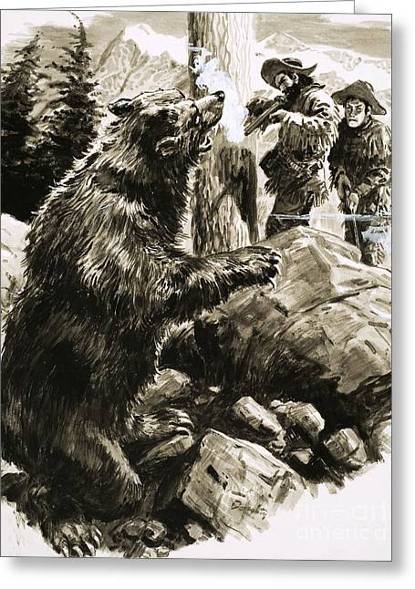 American Grizzly Bear Being Shot By Trappers Greeting Card by CL Doughty