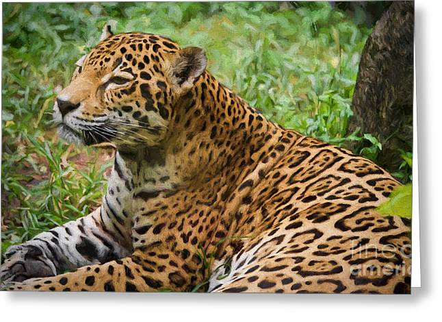 American Jaguar Greeting Card by Judy Kay