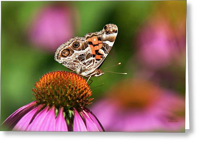 American Painted Lady Butterfly Greeting Card by Christina Rollo