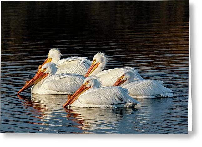 Greeting Card featuring the photograph American Pelicans - 03 by Rob Graham